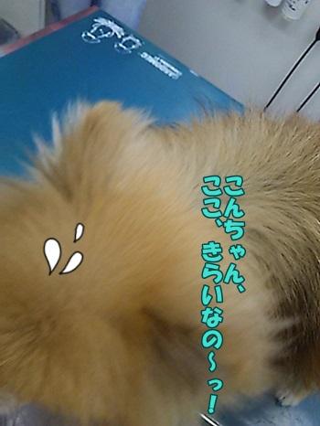 DSC_011100.jpg