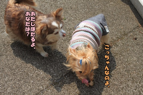 IMG_000009.jpg