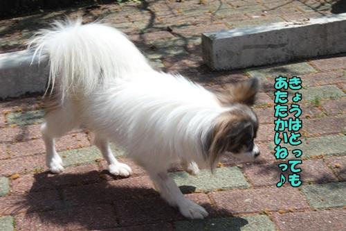IMG_15042701.jpg