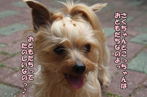 IMG_15042736.jpg