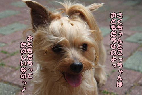 IMG_15042737.jpg