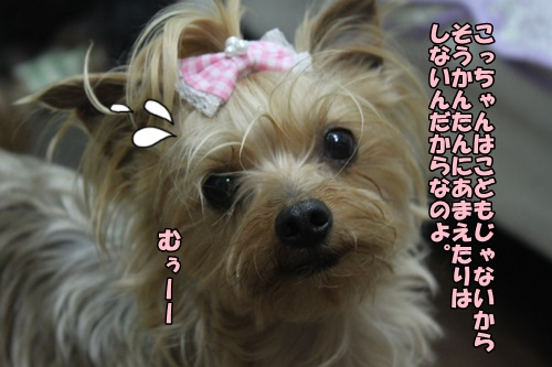 IMG_15042809.jpg