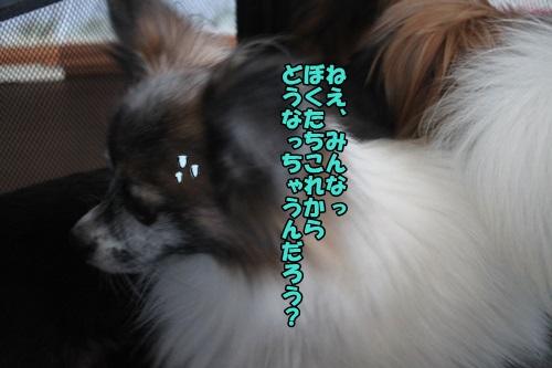 IMG_15043005.jpg