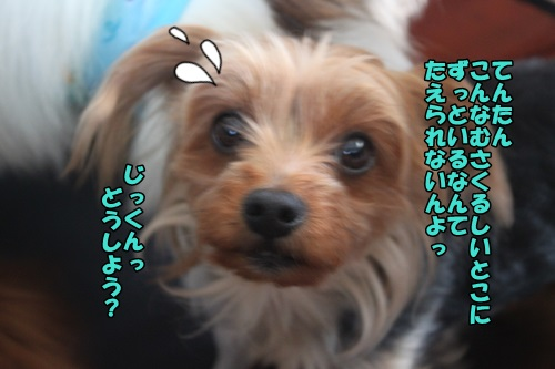IMG_15043006.jpg