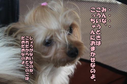 IMG_15043008.jpg