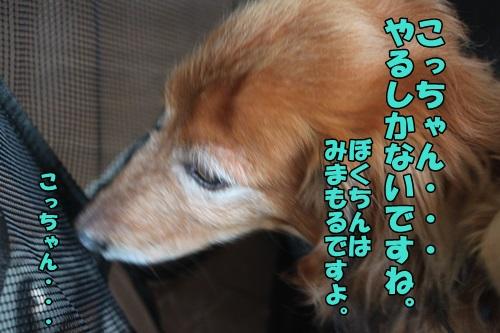 IMG_15043009.jpg