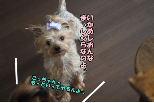 IMG_15050102.jpg