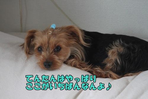 IMG_15050504.jpg
