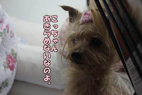 IMG_15050510.jpg