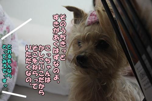 IMG_15050514.jpg