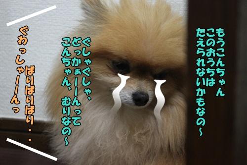 IMG_15050517.jpg