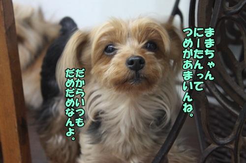 IMG_15050520.jpg