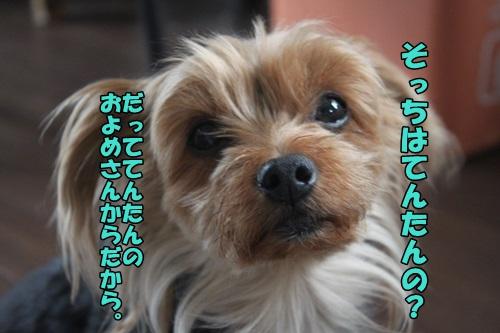 IMG_15050706.jpg