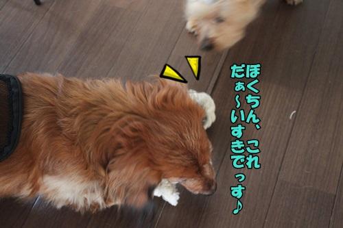 IMG_15051120.jpg