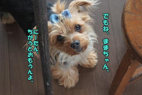 IMG_15051121.jpg