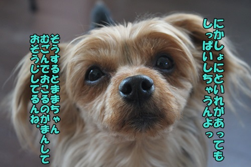 IMG_15051407.jpg