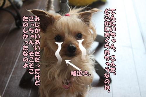 IMG_15051504.jpg