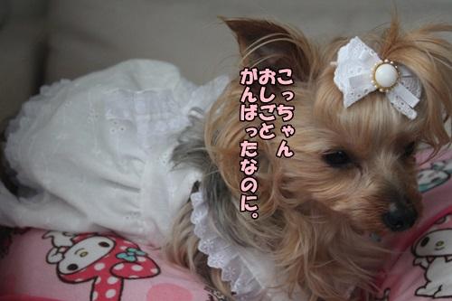 IMG_15051901.jpg