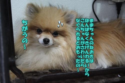 IMG_15052104.jpg