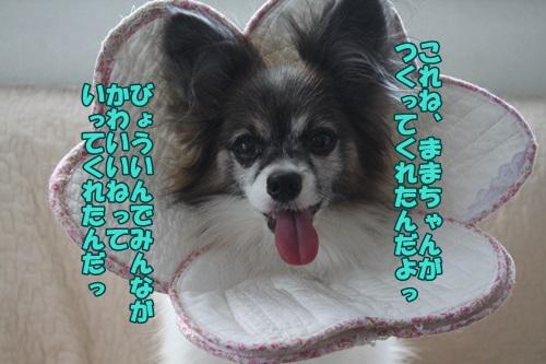 IMG_15052402.jpg