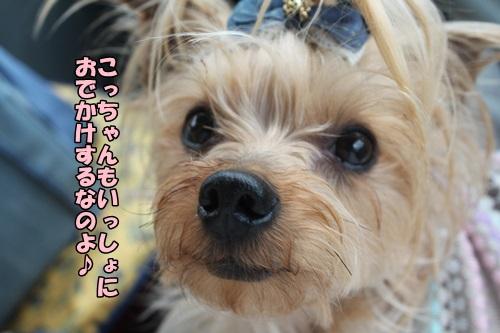 IMG_2015041705.jpg