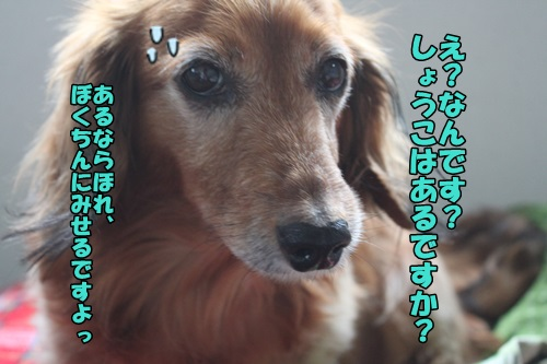 IMG_2015041905.jpg