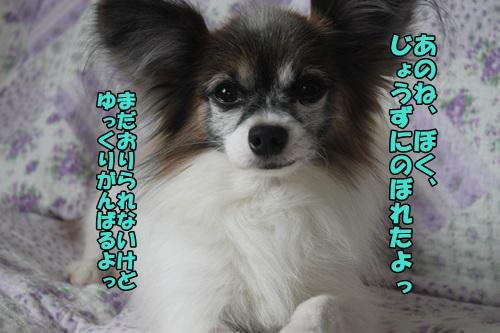 IMG_2015041909.jpg