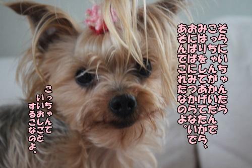 IMG_2015042305.jpg