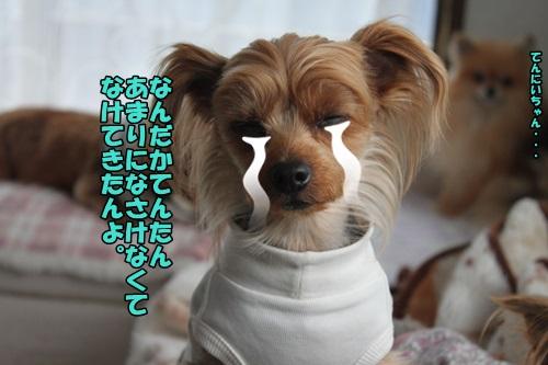 IMG_2204_201503100925182fd.jpg