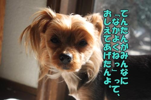 IMG_2257_2015031310341364f.jpg