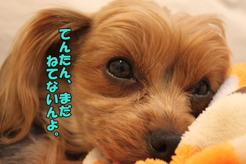 IMG_2430_201503201022084f7.jpg