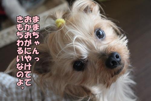 IMG_2438_2015032111305959b.jpg