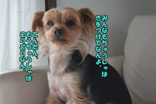 IMG_2514_20150323145724b88.jpg