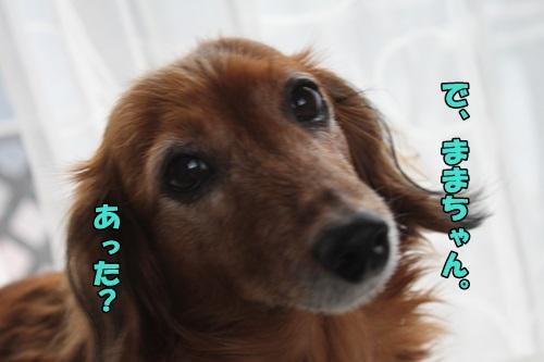 IMG_2533_20150325141439bc6.jpg