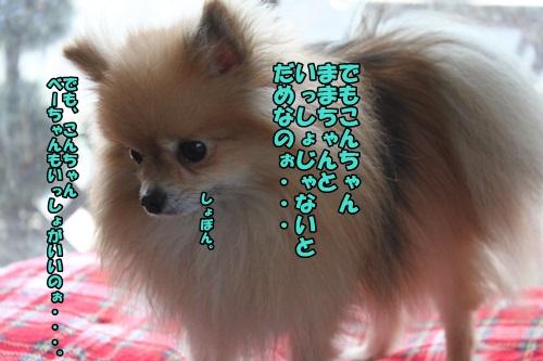 IMG_2574_201503272108060b6.jpg
