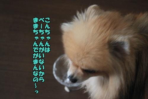 IMG_2824_2015040208104996f.jpg
