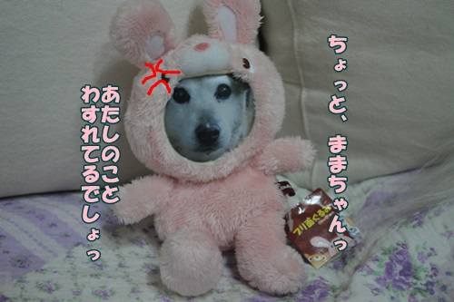 IMG_41970.jpg