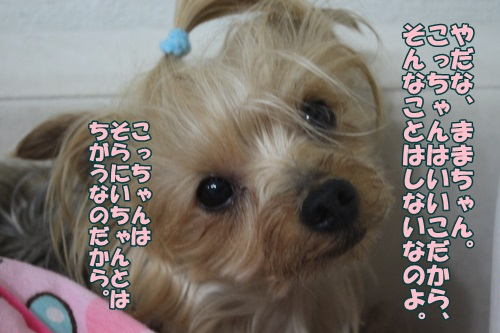IMG_43250.jpg