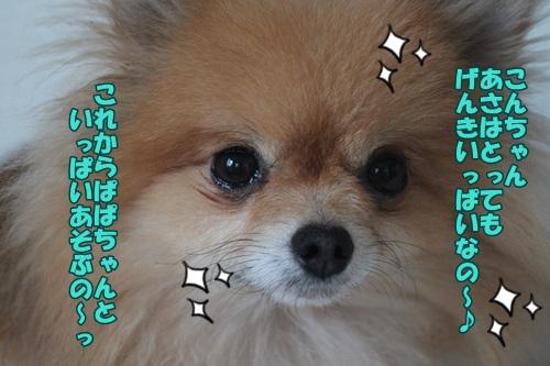 IMG_43460.jpg