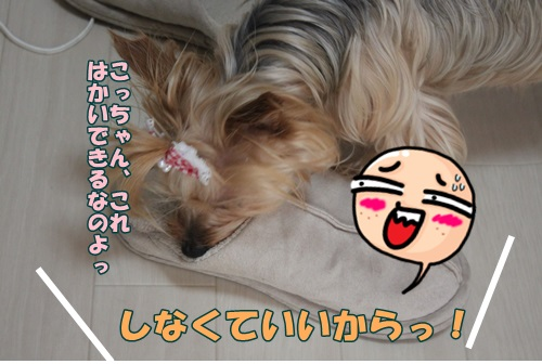 IMG_44010.jpg