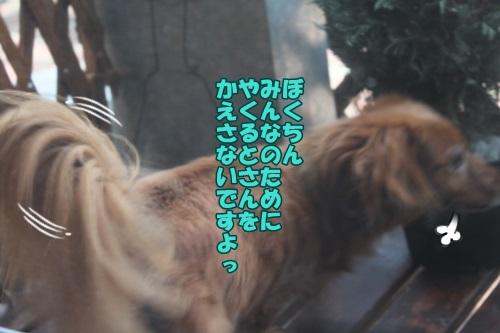 IMG_44500.jpg