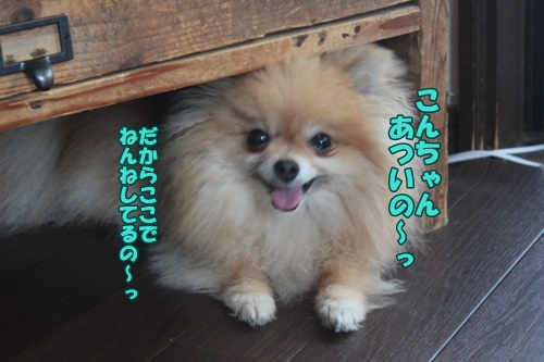 IMG_44920.jpg