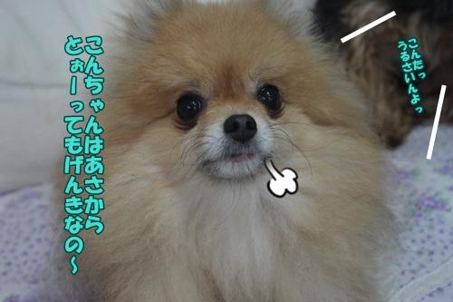 IMG_45310.jpg