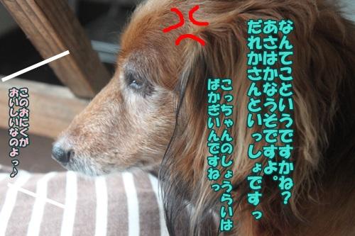 IMG_45450.jpg