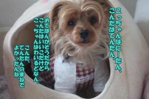 IMG_45540.jpg