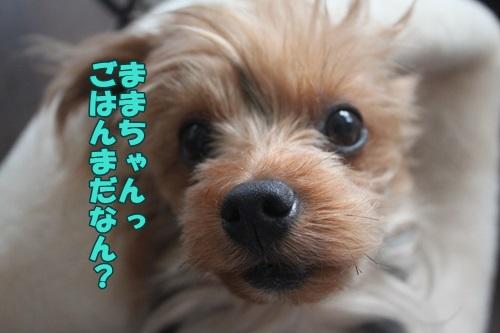 IMG_45980.jpg