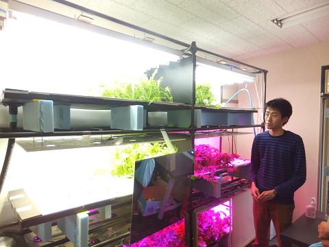 0881 菜っ葉の成長