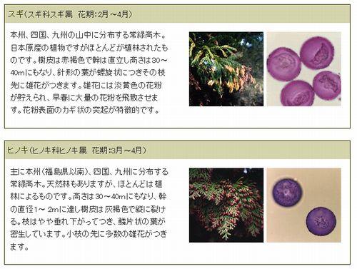 花粉症の原因植物