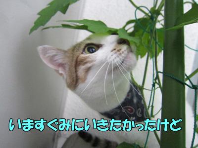 150603-07.jpg