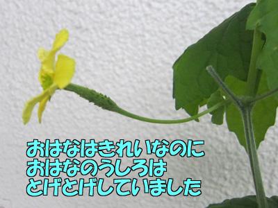 150603-09.jpg